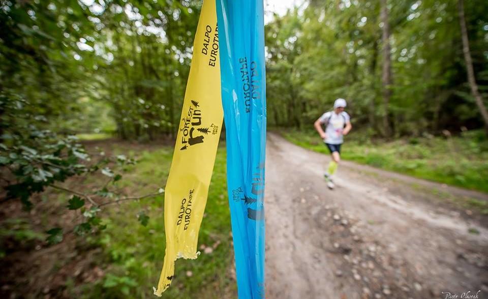 forest run 1